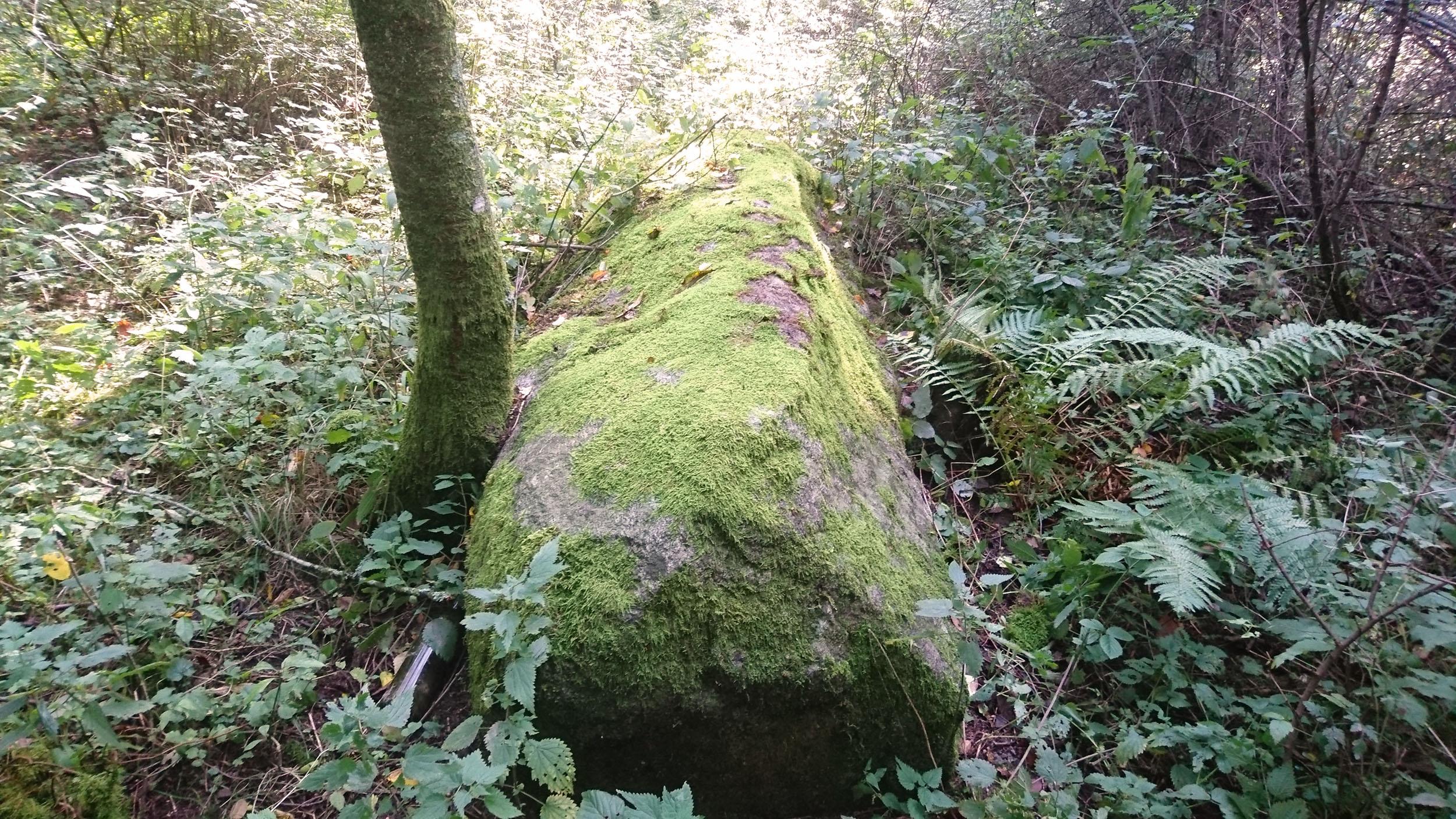 Solstrålarna visar var Drottningstenen finns när vi tränger genom skogen.