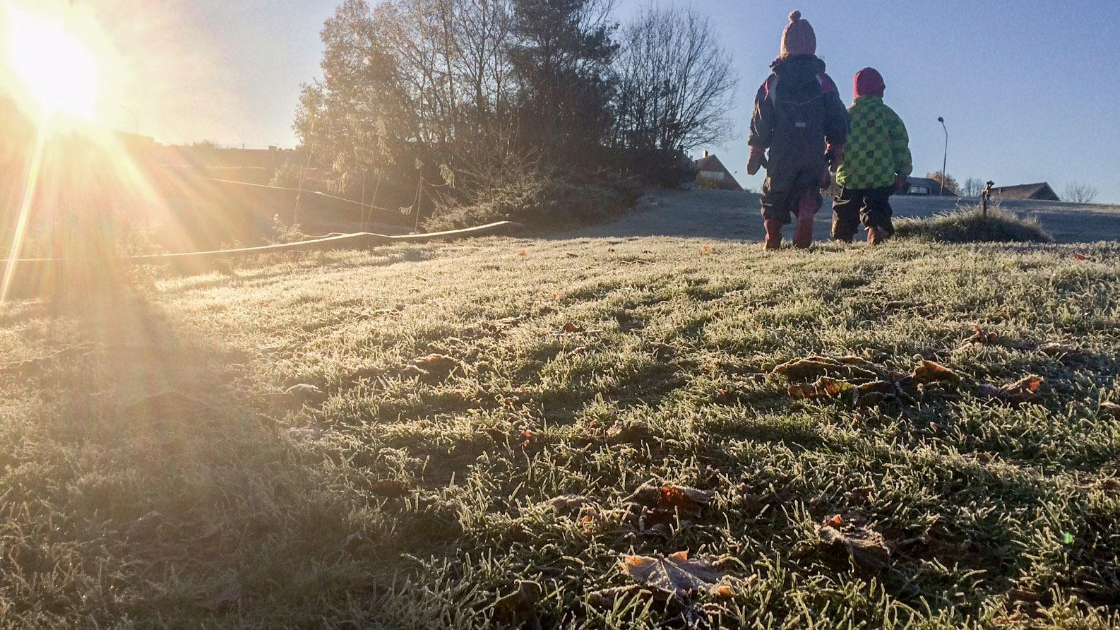 Frostbitet gräs till frukost.