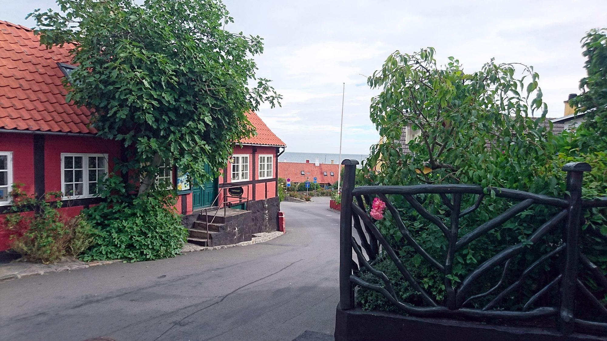 Fikonhuset i Gudhjem huserar en konstnär med ateljé, och flera stora fikonträd.