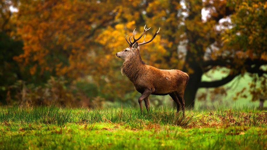 Det finns gott om vilt i de djupa skogarna runt Brösarp.