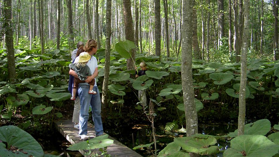 Pestskråp är en hög växt som kan hittas längs Verkeån.