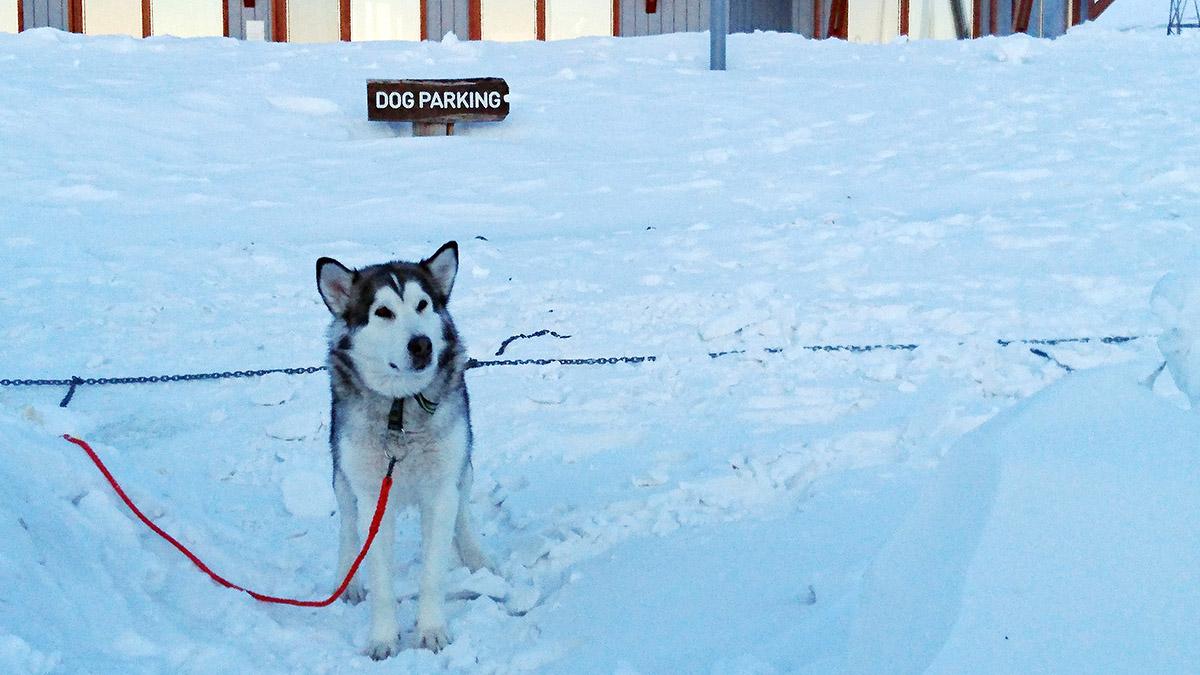 Hundparkering på Svalbard.