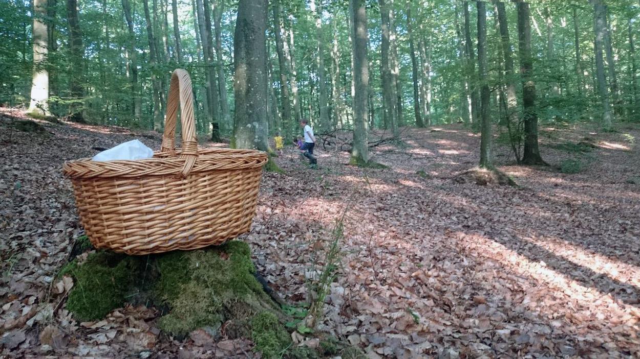 Med 3000 hektar naturreservat växer det många ton svamp i skogarna runt Brösarp.
